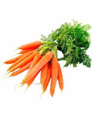 Zanahoria (precio/kg)
