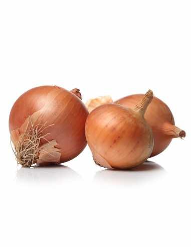 Cebolla Dulce (precio/kg)