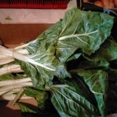 Más verdura lista para salir hacia vuestras casas. Estas acelgas tienen pintaza!!! #loveverdura #lovelahuerta #lovelavalldigna #lovenaranjas #healthyfood #comidasaludable