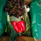 ⏺️ Buenos días!!. Hoy esta caja de verduras será una de las que os lleguen a casa.  ⏺️ Si tú quieres una la puedes personalitzar a tu gusto, con las cantidades y las verduras y hortalizas que prefieras. Link en bio. Y no te olvides de nuestras naranjas, limones y aguacates. Las mandarinas, en breve 😉 #loveverdura #lovelahuerta #loveverdura #lovenaranjas
