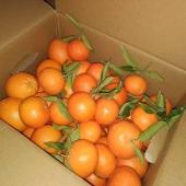 No sabes qué regalar estas Navidades? 🍊Pues qué mejor opció que una caja mixta de naranjas y mandarinas?🥂 Si no puedes estar en la misma mesa que los tuyos mándales todo tu amor concentrado en una de nuestras cajas 💝💝. Recuerda que puedes hacer las combinaciones de cantidades que más os guste. Y también podéis incluir aguacates, limones y nuestra verdura 🥦🥒🥕🥬🥑🥔🥰. REGALA SALUD, REGALA AMOR!!!!🤩💖🎁 #lovelahuerta #lovenaranjas #lovemandarinas #loveaguacates #loveverduras #naranjasymandarinssdelsvalldigna #aguacatesdelavalldigna
